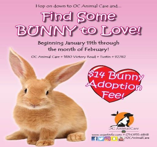 Adopt a Shelter Rabbit Month 2020