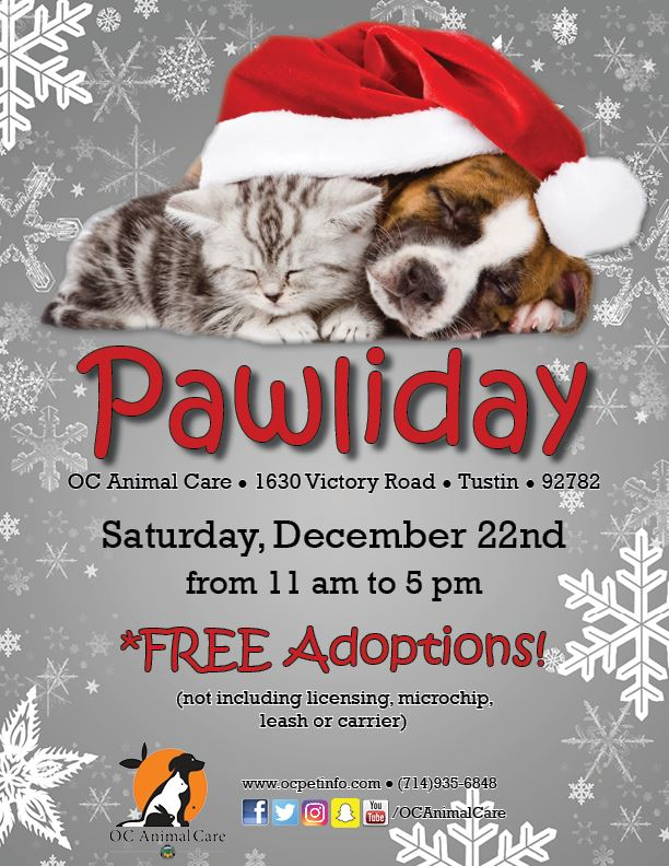 Pawliday Flyer 2018